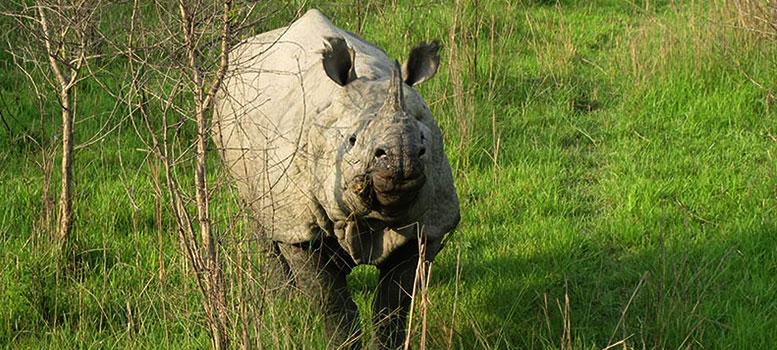 Chitwan Jungle Safari Program Nepal, Wildlife Safari in Nepal